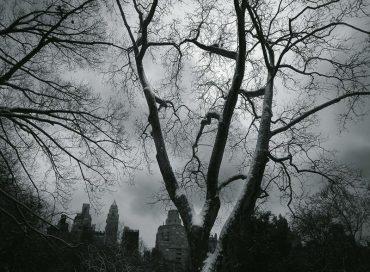 Tomasz Stanko New York Quartet: December Avenue (ECM)